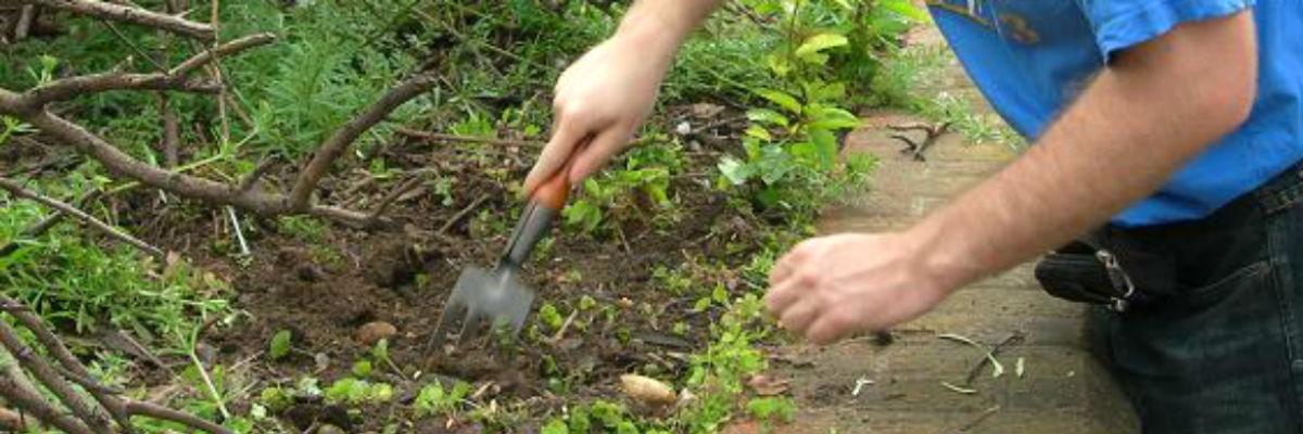 guerilla-gardening-pic