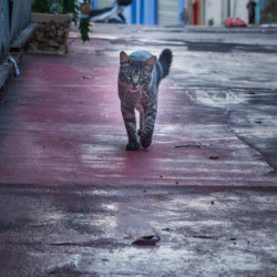stray-cats-tel-aviv-pics