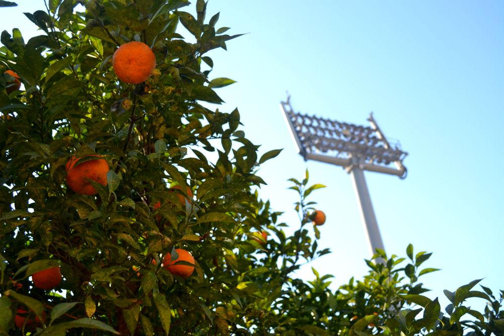 oranges-valencia