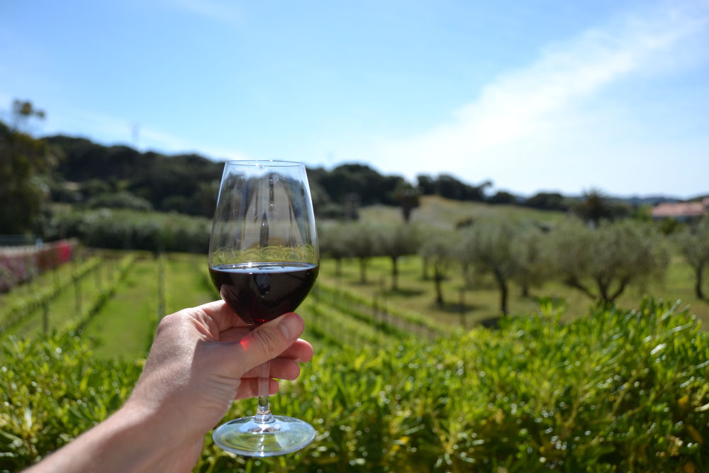 menorca agrotourism wine and cheese