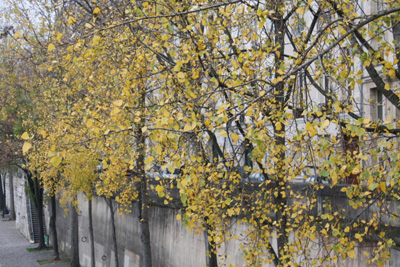 paris-trees-autumn