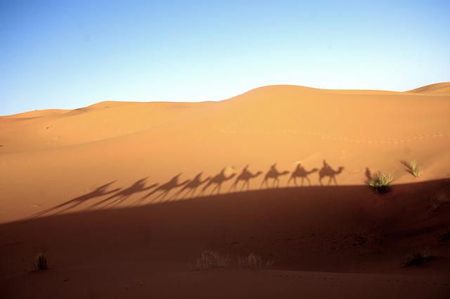 Merzouga Desert (Morocco) – Mycroyance.  The shadows of people trekking on camels through the Merzouga desert.