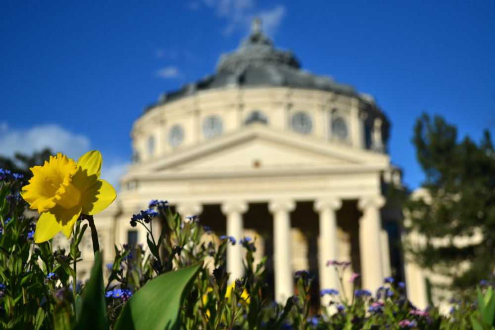 Is Bucharest starting to bloom?