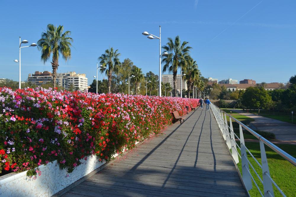 flower-bridge-valencia