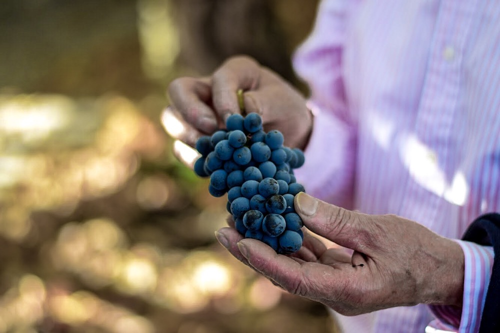 Galician grapes