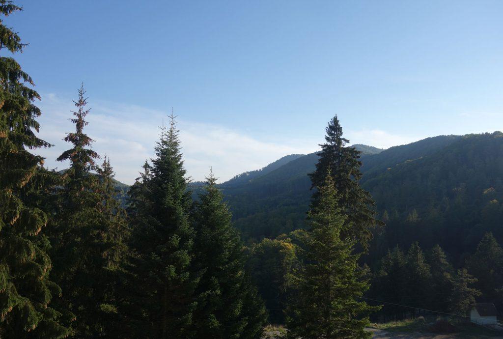 balvanyos forest